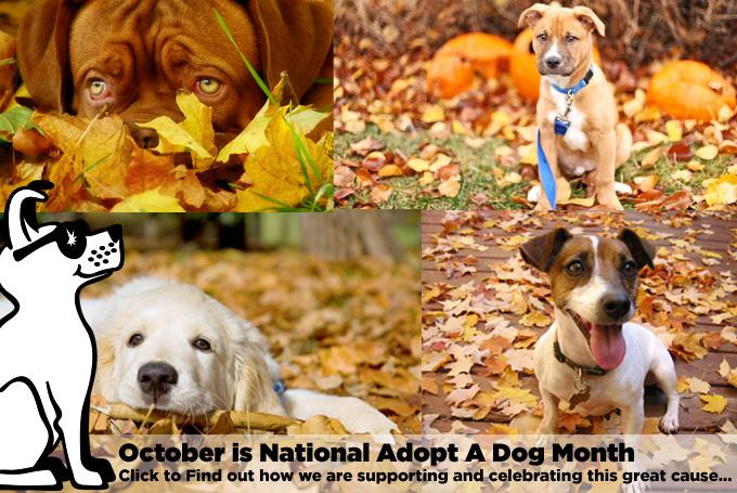 National Adopt A Dog Month